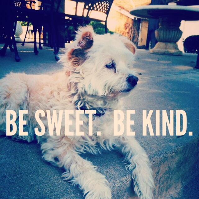 Stuff Sophie Says - be sweet, be kind: The Lily Honey Life