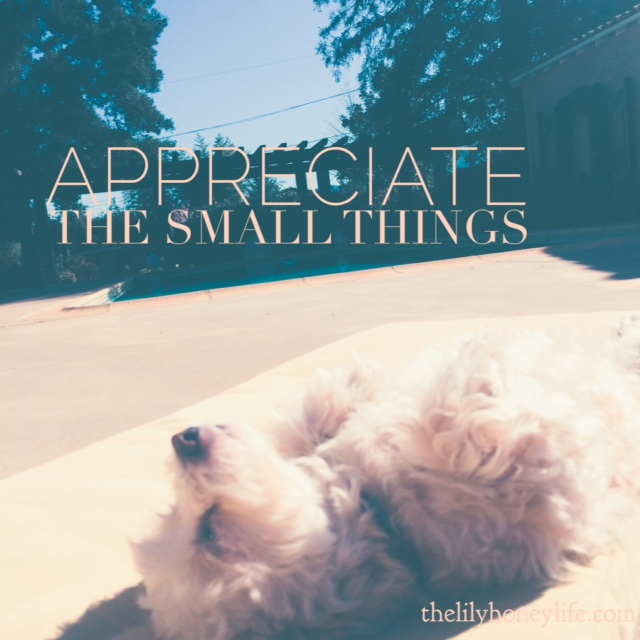 Appreciate the small things {the lily honey life}